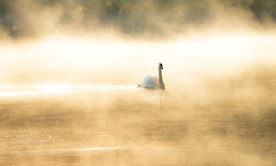mist by bzzz600 via http://ift.tt/2aLo1ZW