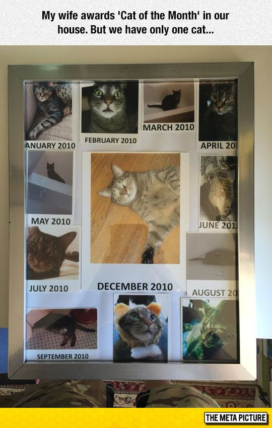 Cat Of The Month - I need to do this!