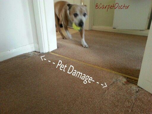 Pet Damage Carpet Repairs By Doctor Helpful Things