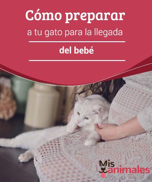 Cómo Preparar A Tu Gato Para La Llegada Del Bebé Gatos Llegada De Bebe Bebe