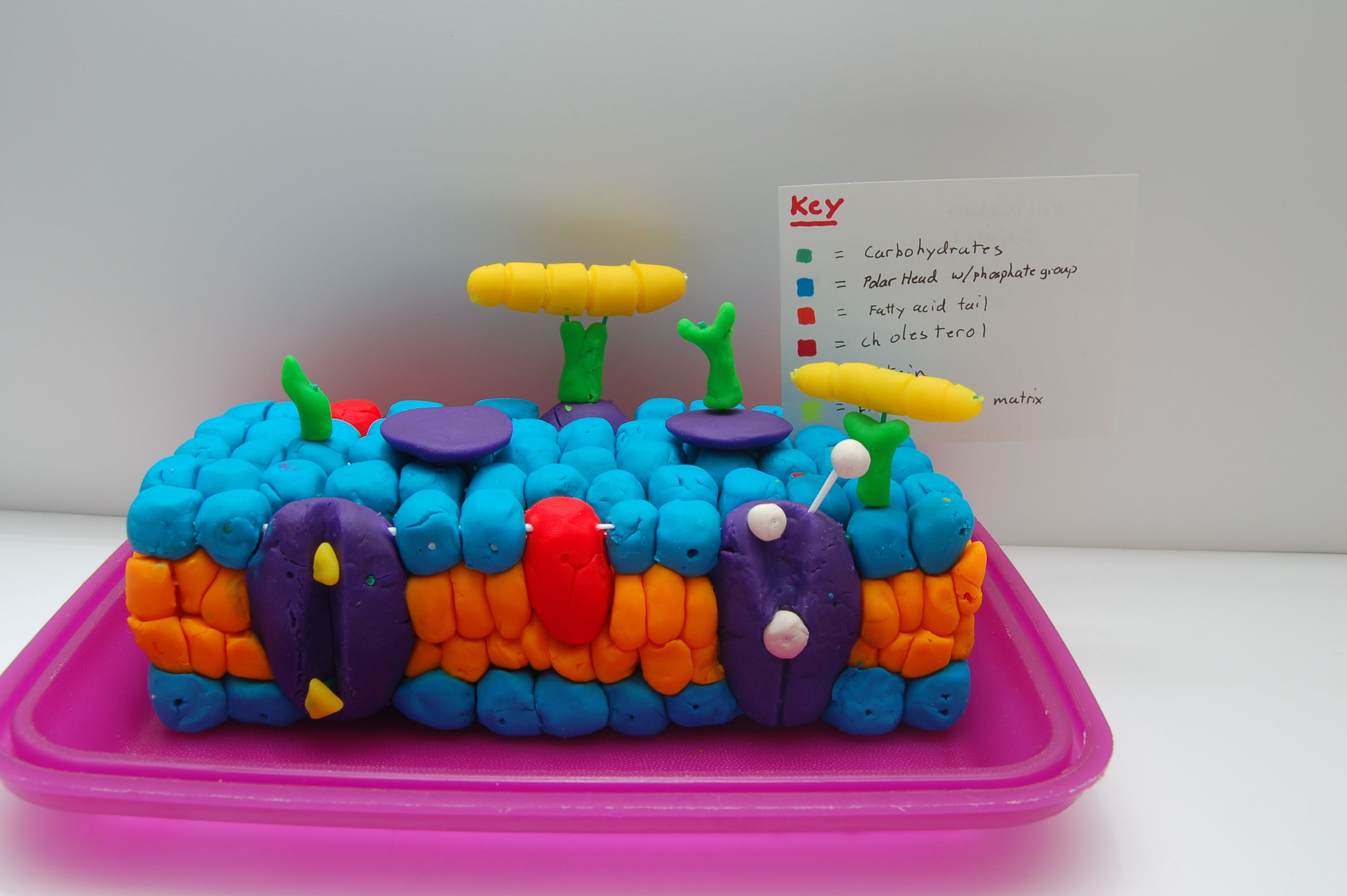 Related Cell Membrane