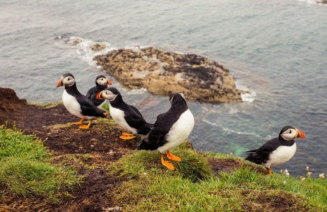 The Staffa & Treshnish Isles Wildlife Tour to see Puffins in Scotland