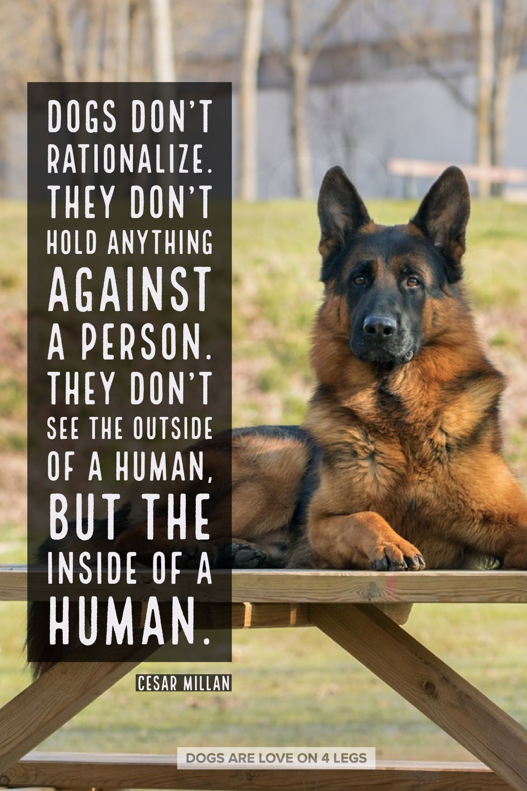 Dog quote dogs dont rationalize dog dog quotes