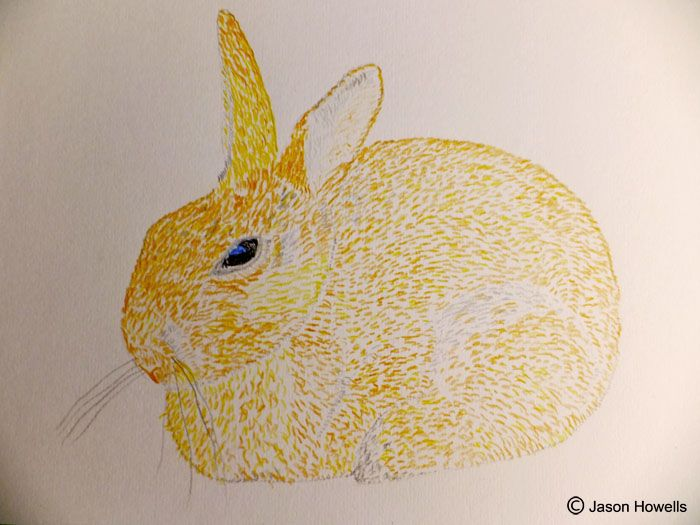 Colour pencil rendering of a Rabbit.