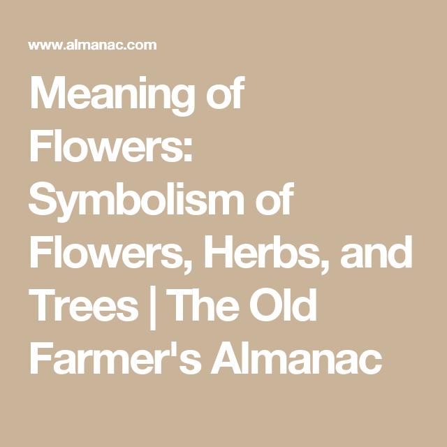 Flower Meanings The Language Of Flowers A Little Bit Of This And