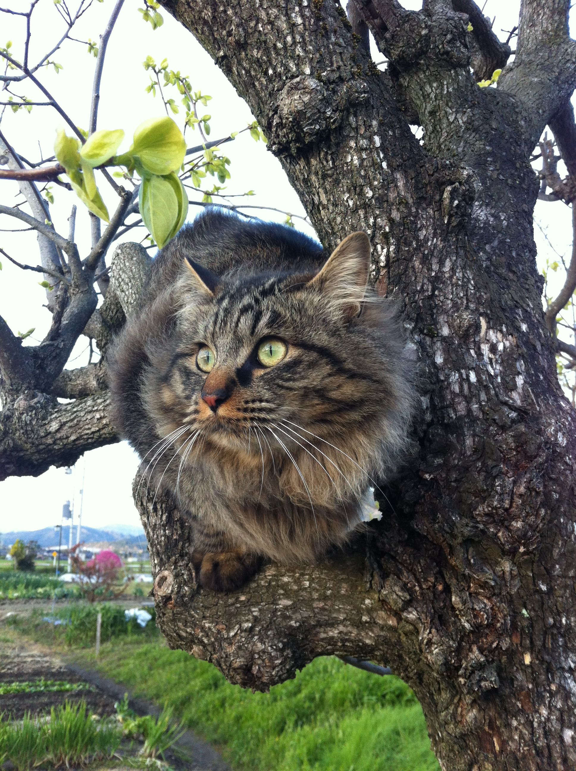 木登り上手になってきたwo