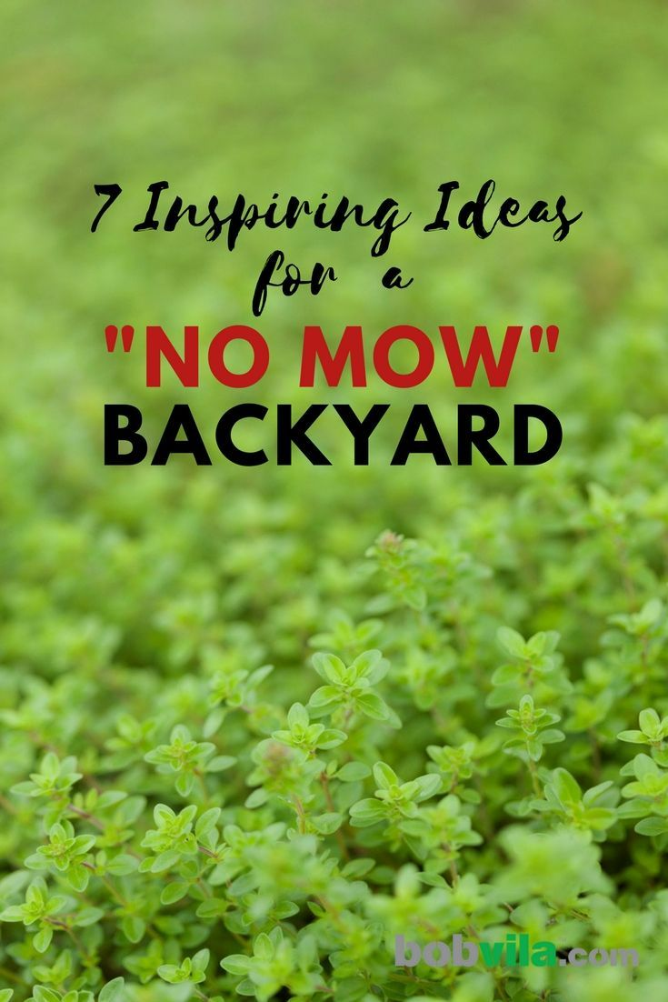 "Goodbye Grass: 13 Inspiring Ideas for a ""No Mow"" Backyard ... on Cheap Backyard Ideas No Grass  id=58645"