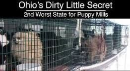 Schrock S Amish Farm And Village In Berlin Ohio Not A Puppy Mill Puppy Mills Buy Puppies Puppies