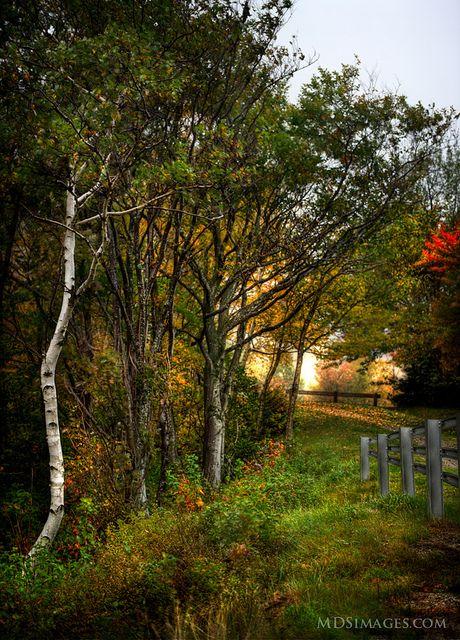 A fairy tale scene in Rural New Hampshire
