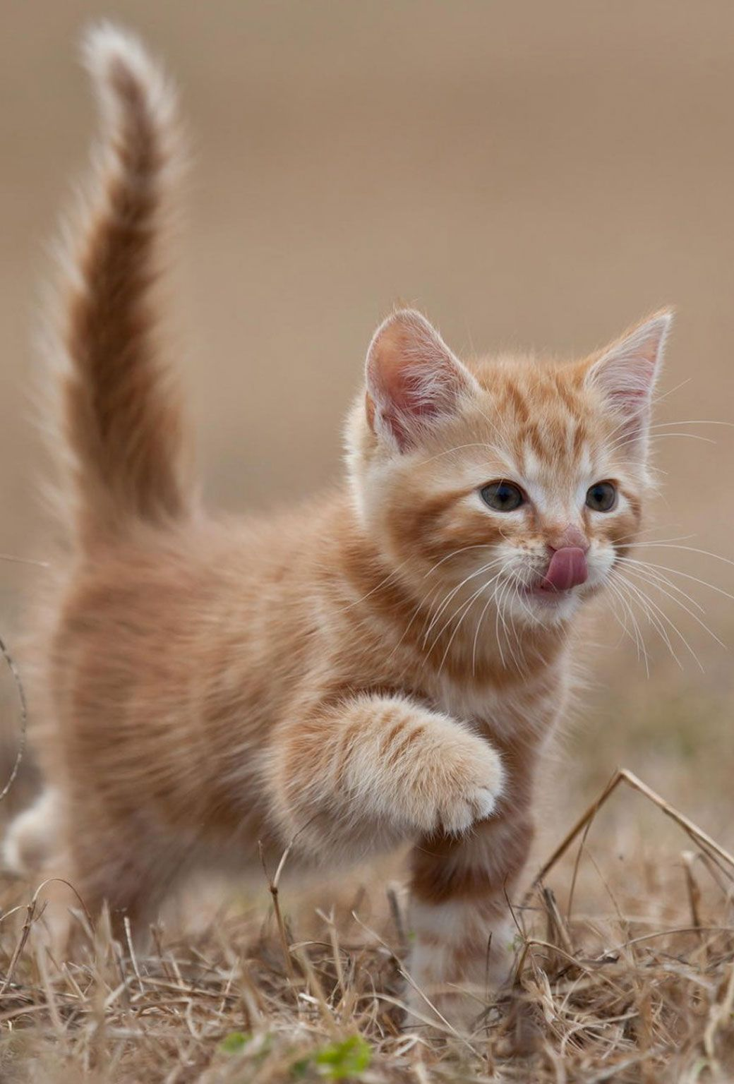 Parallaxwallpapers Baby Cats Kittens Cutest Cats