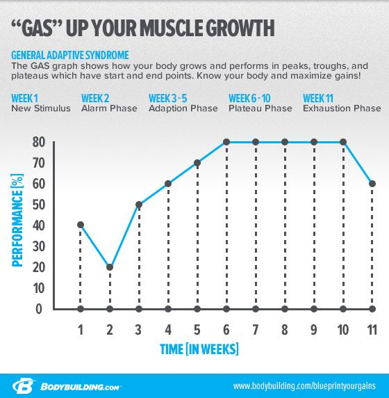 Blueprint Your Gains For Long-Term Growth Gain, Workout and - new molecular blueprint definition