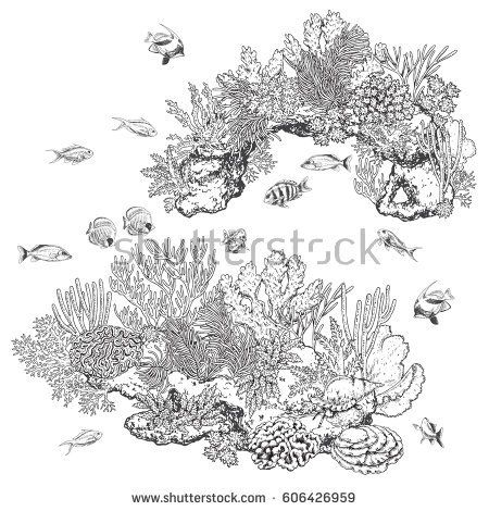 Hand drawn underwater natural elements. Sketch of reef
