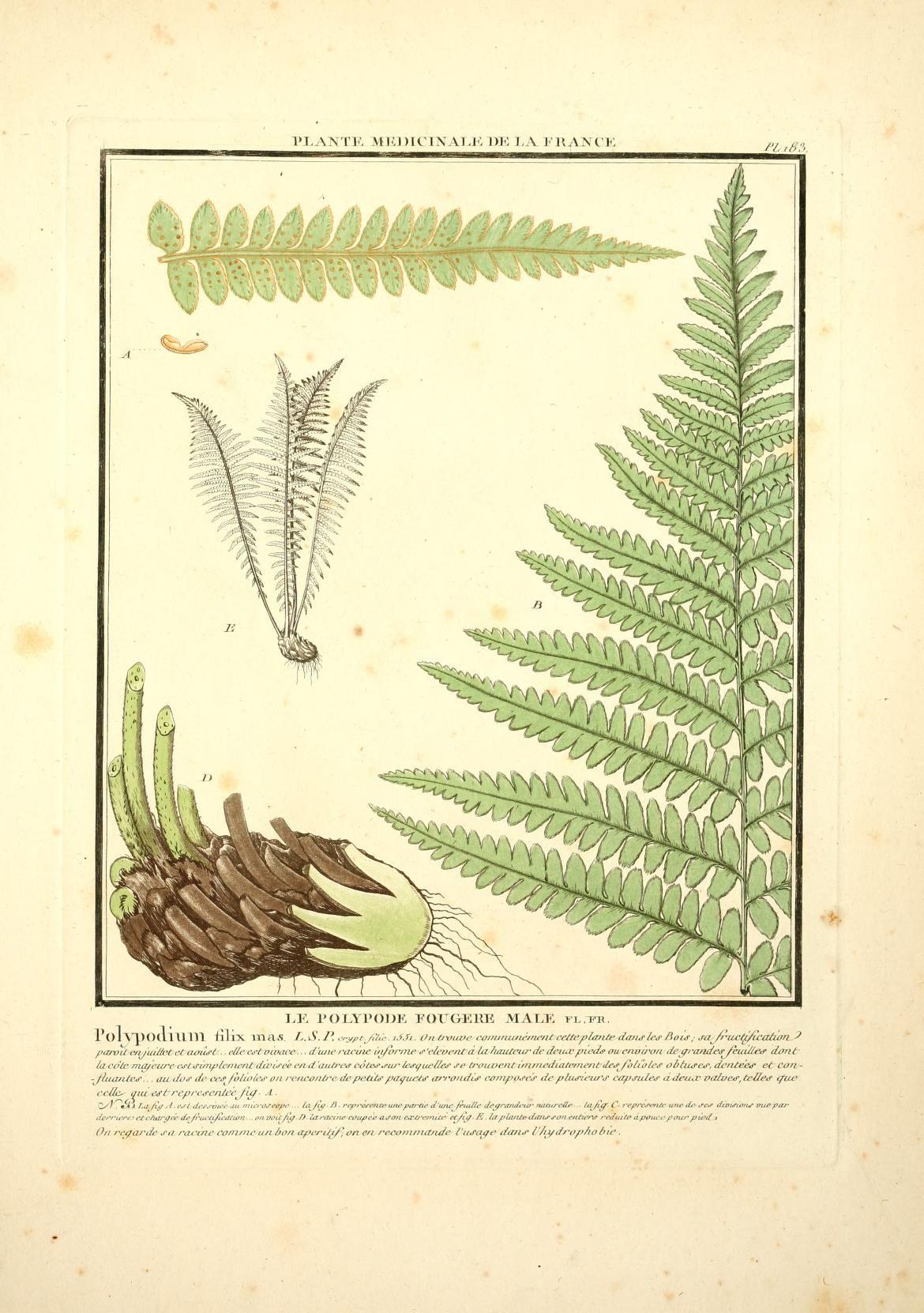 Herbier de la France, 1780