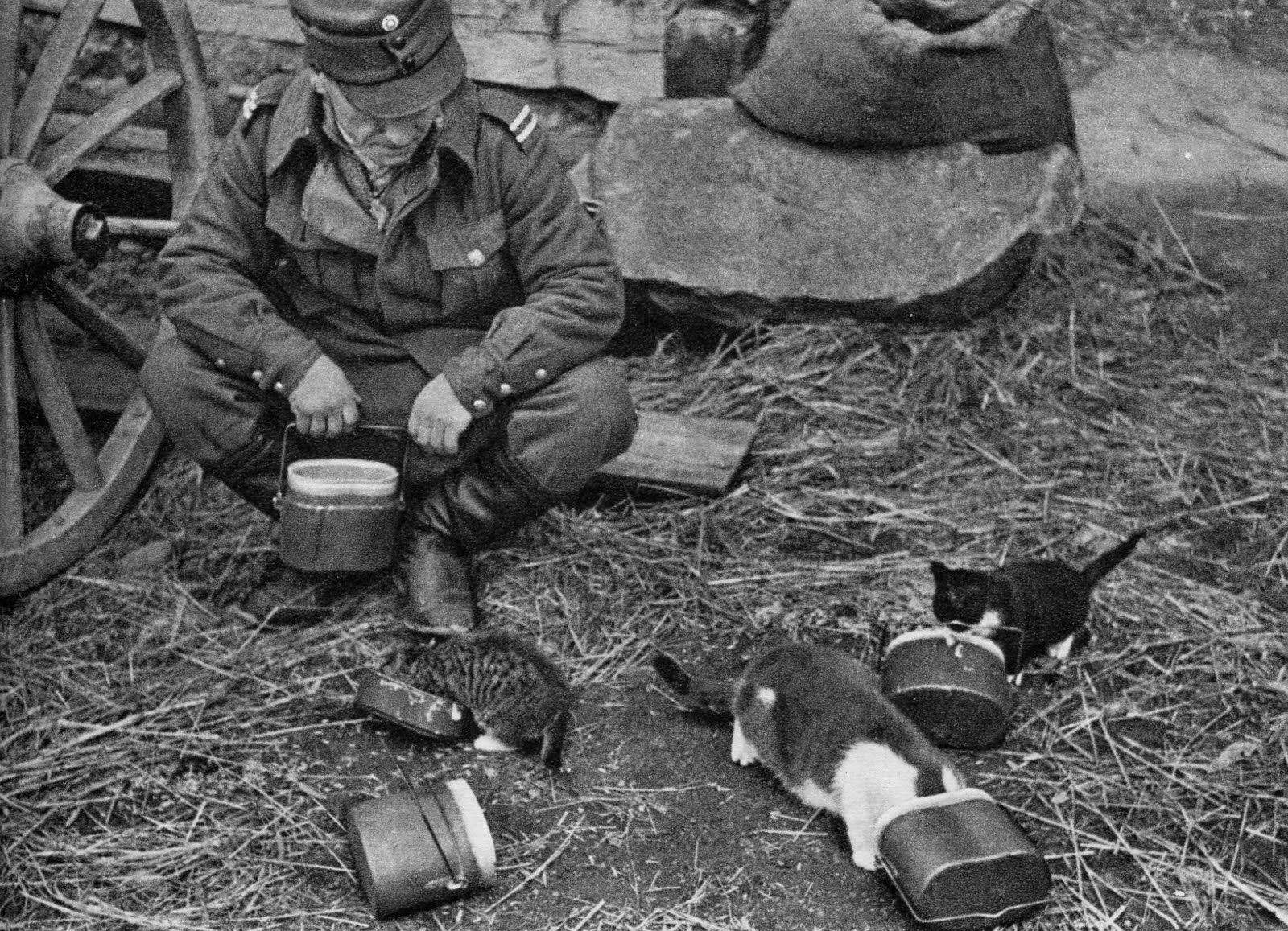 Finnish Soldier Feeding Kittens  WWII  [1600x1157