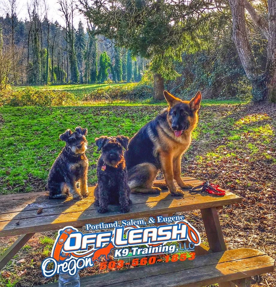For The Best Dog Trainer In Beaverton Oregon Call Off Leash K9 Dog