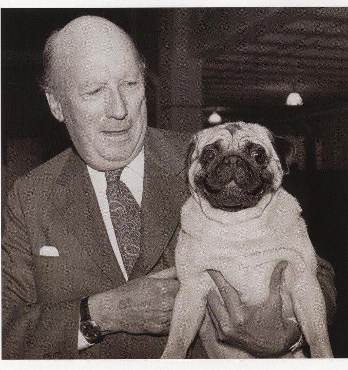 Pug Westminster Best In Show 1981 Westminster Dog Show Dog