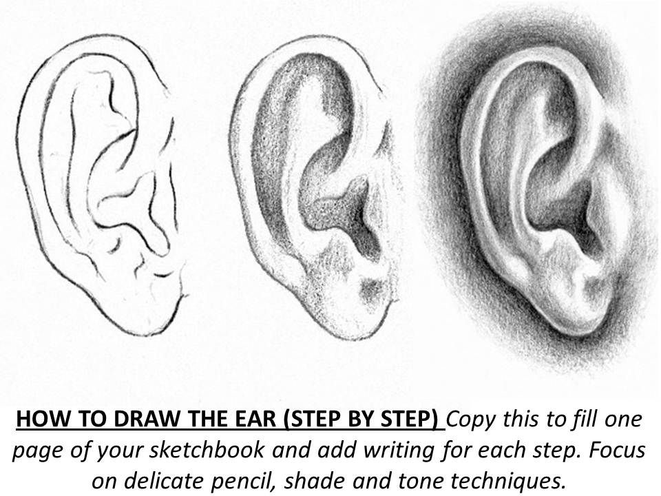 How To Draw Ear Step By Step Worksheet Portrait Drawing Drawings Sketch Book