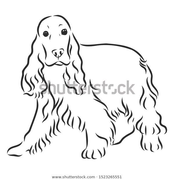 English Cocker Spaniel Dog Sketch Contour เวกเตอร สต อก ปลอดค าล ขส ทธ 1523265551 ภาพวาดส น ข ภาพประกอบ