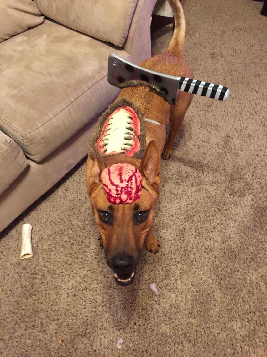 DIY zombie dog costume Pet halloween costumes, Cute dog