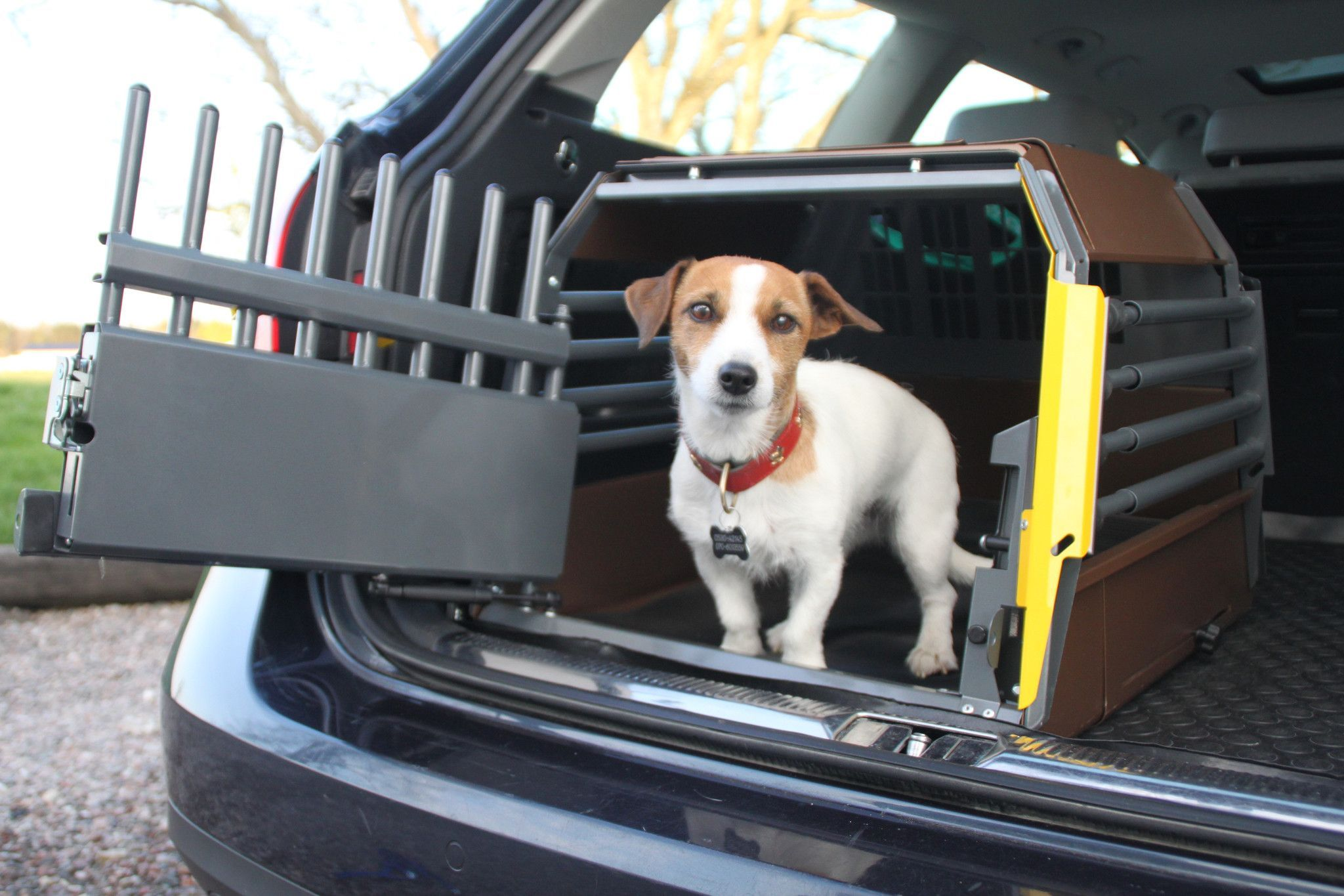 How to transport dogs