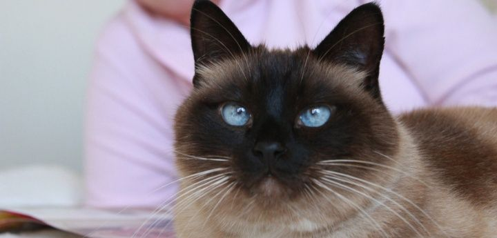 Time to say goodbye to your cat | Advice on cat euthanasia, the euthanasia process and bereavement support | Blue Cross | Cats, Cat advice, Pet advice