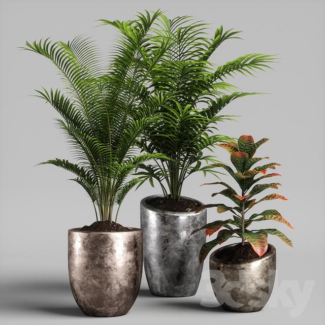 Fiori 3ds.3d Models Indoor Plants Set 09 3d Mod Plants Flowers Nel 2019