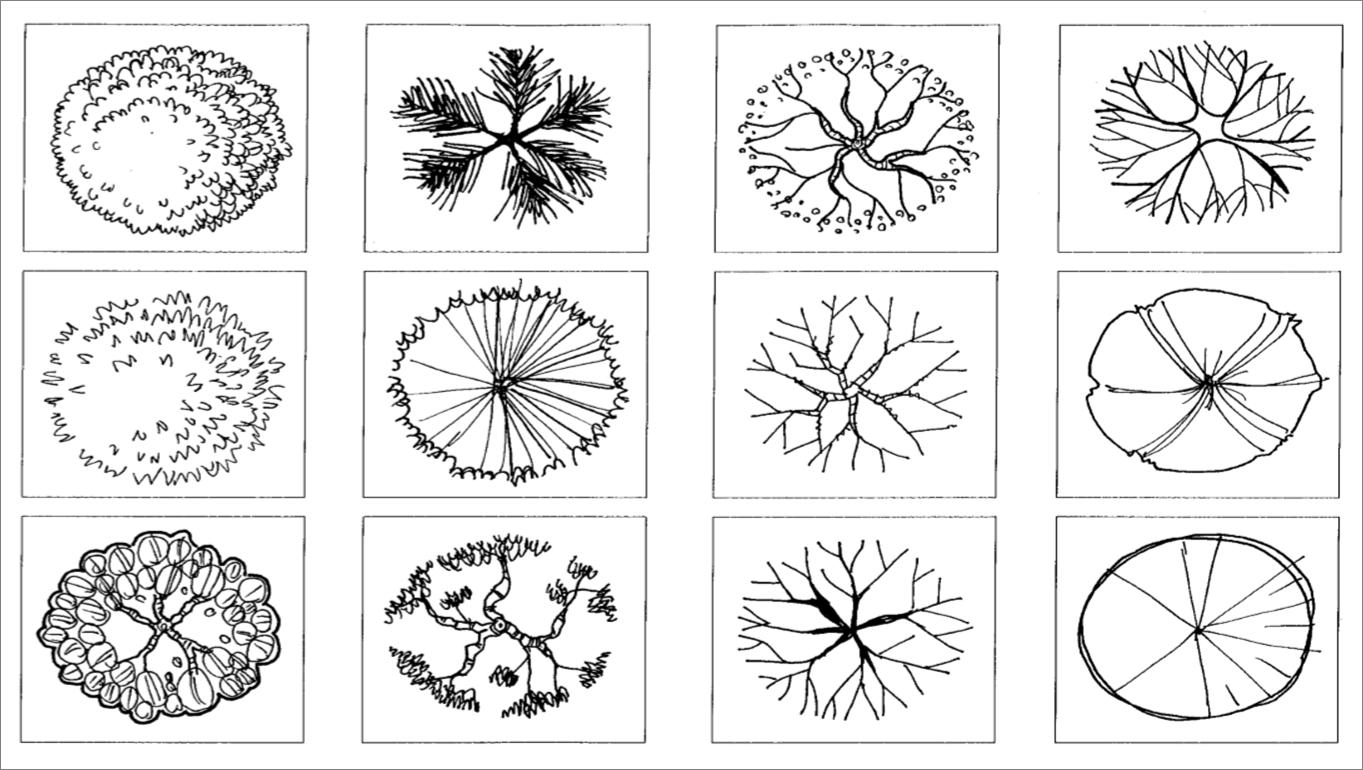 Trees Symbols In Plan Plans Pinterest Architectural Plants