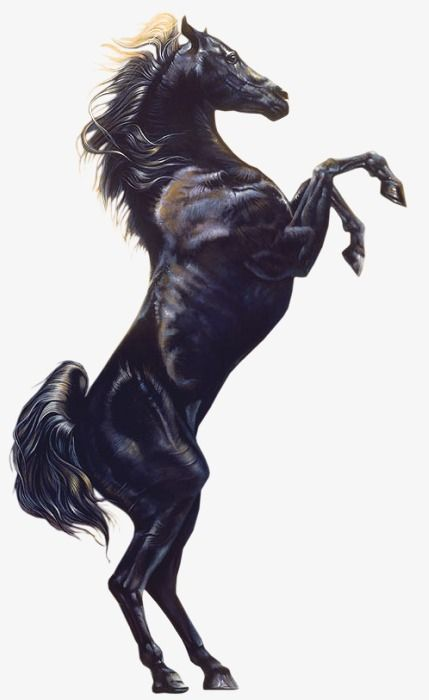 Jumped Horse