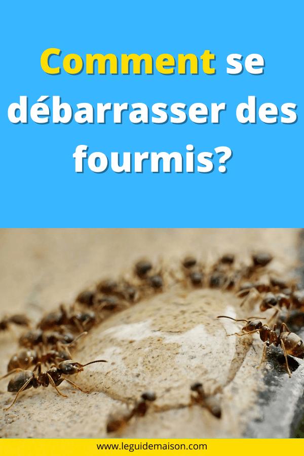 Il est possible d'éliminer en toute sécurité et efficacement votre problème de fourmis domestique de vos meubles, tapis et surfaces rembourrées. Il existe plusieurs façons de le faire, découvrez les dans cet article #fourmis #astuce #maison #diy #hack