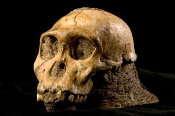 This pre-human ate like a chimp (Photo: Lee Berger)