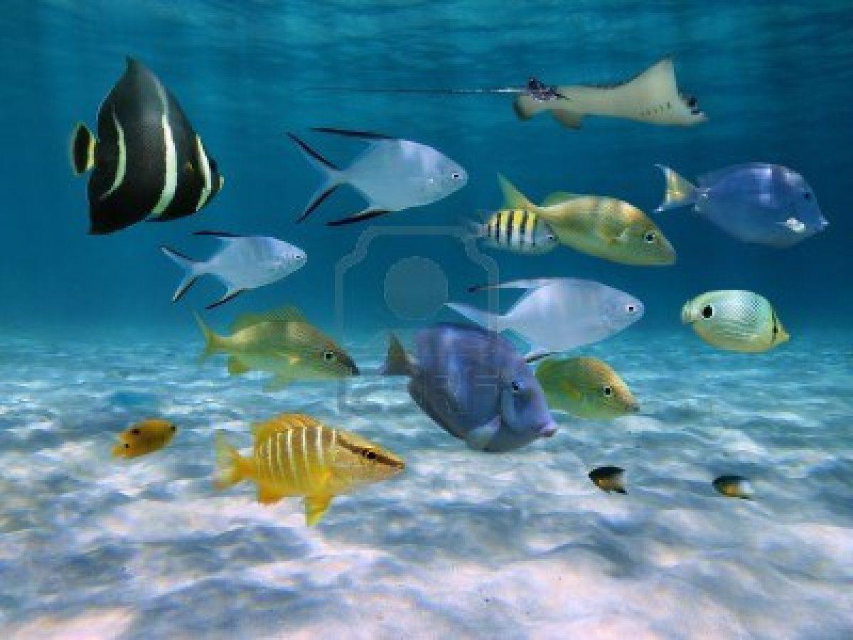 Stock Photo Image Of Fish Underwater Fish Fish