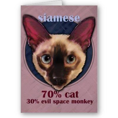 Chats, Siamois, Cats, Siamese, Gats, Siamès, | Siamese ...