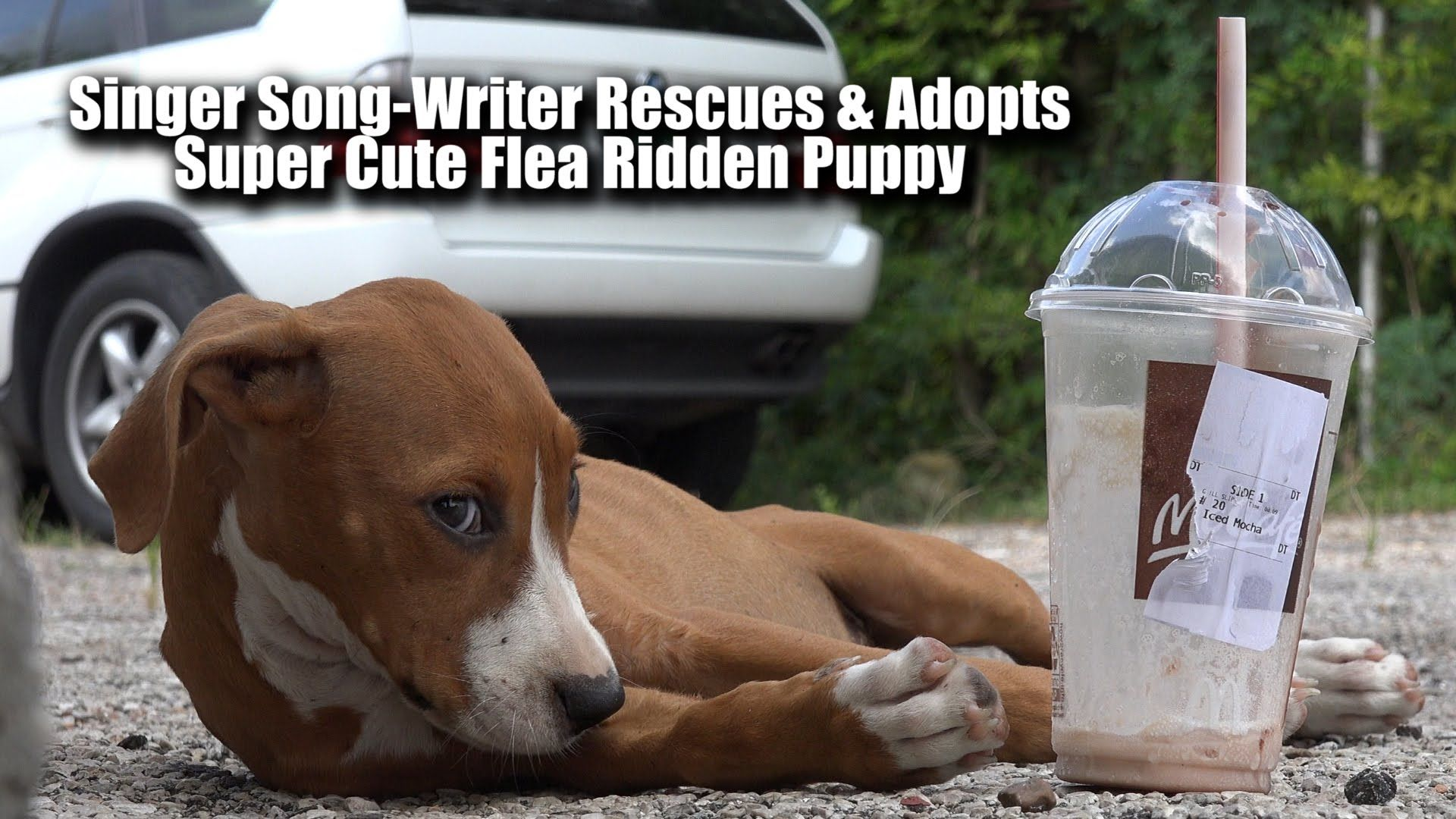 Singer Song Writer Rescues Flea Ridden Cute Stray Puppy Filming