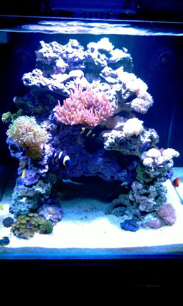 Solus S 90g Cube Page 2 Saltwater Fish Tanks Aquarium Fish