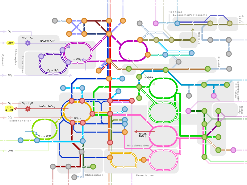 Metro-style map of major metabolic pathways | Patient Recipes ...