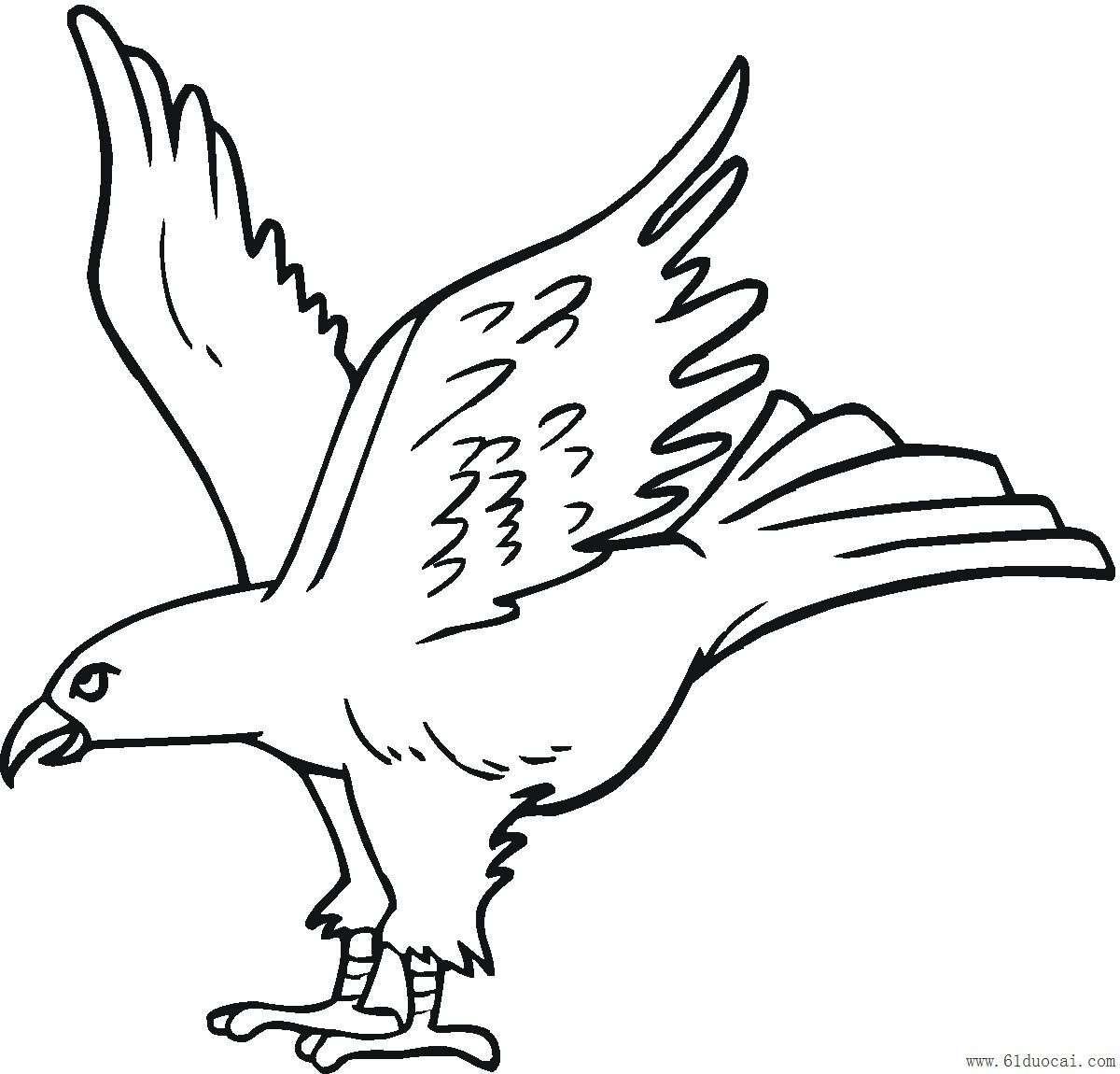 Osprey Bird Coloring Pages Yahoo Image Search Results Coloring
