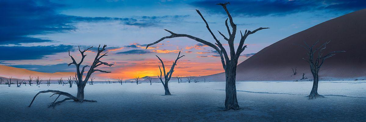 United We Stand By Alexander Vershinin Nature Landscape Sunset Sunrise Dead Fine Art Landscape Photography Fine Art Landscape Landscape Photography