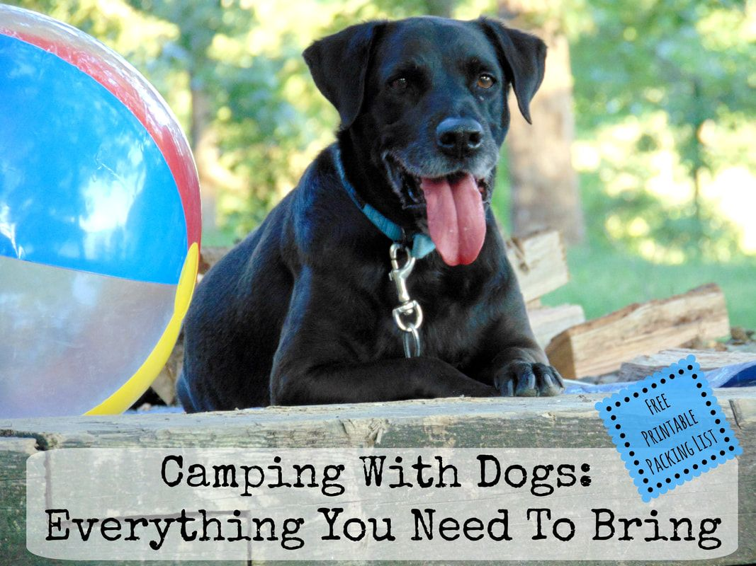 Camping With Dogs Everything You Need To Pack Free