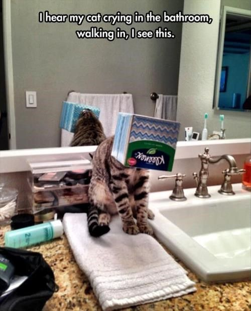 If I Fits Experiment Goes Horribly Wrong Funny Cat Memes Cat Crying Cats