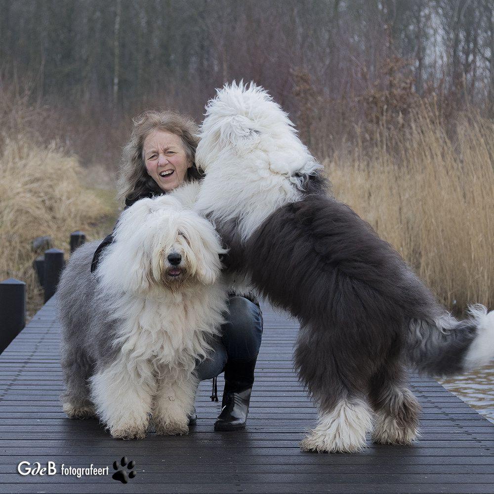 H A P P Y Dog Gone It Old English Sheepdog English Mastiff
