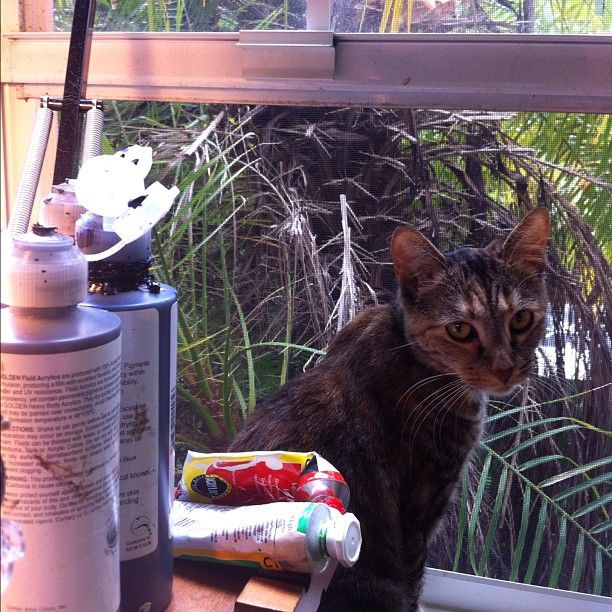 "Our new wild kitty rescue - ""Sunshine"" - she loves to sit here in my studio next to me while I paint!    Photo by strangeling • Instagram"