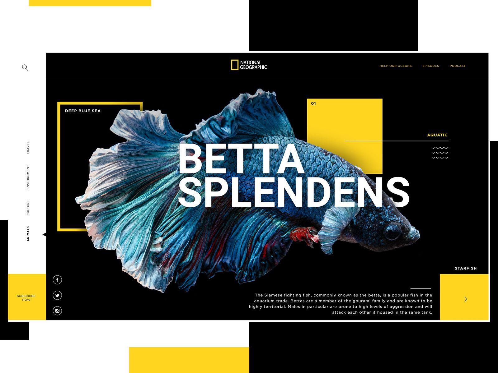 National Geographic Website Design Concept Creative Website Design Inspiration Webpage Design Website Design
