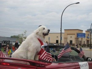 Local Dog Elected Mayor What A Time To Be Alive Dog Rates