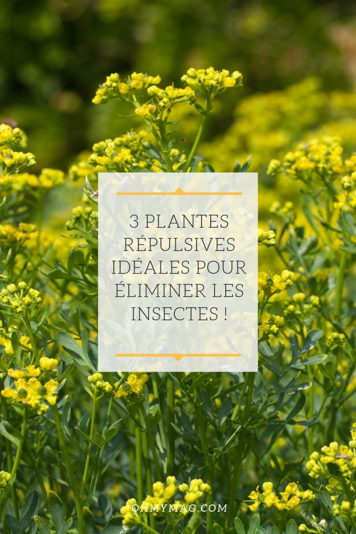 Eloigner Les Fourmis Au Jardin 3 plantes répulsives idéales pour éliminer les insectes