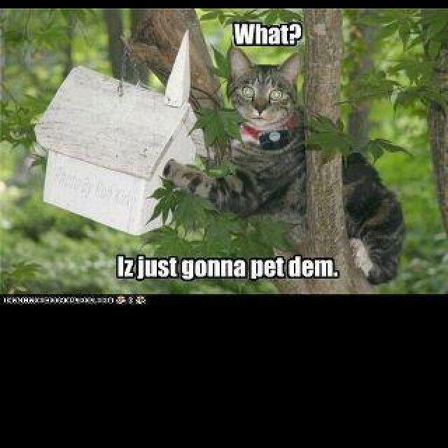 Lil kitty kat!:)