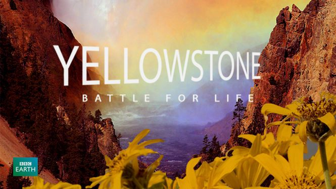 Yellowstone: Battle for Life - The most gorgeous nature photography