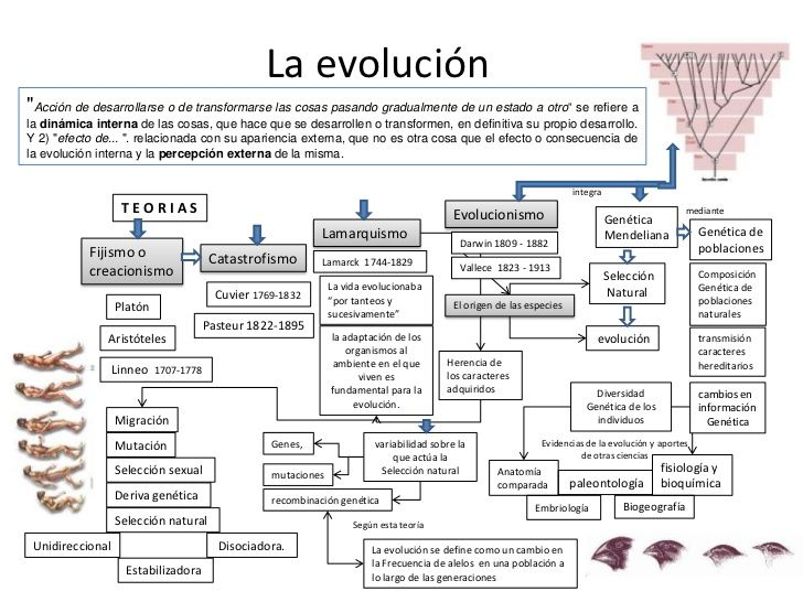 Cuadro Comparativo De La Teoria Evolucionista Y Creacionista Buscar Con Google Word Search Puzzle Words Search