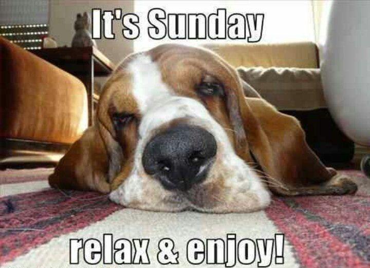 Bildergebnis für happy sunday dog images