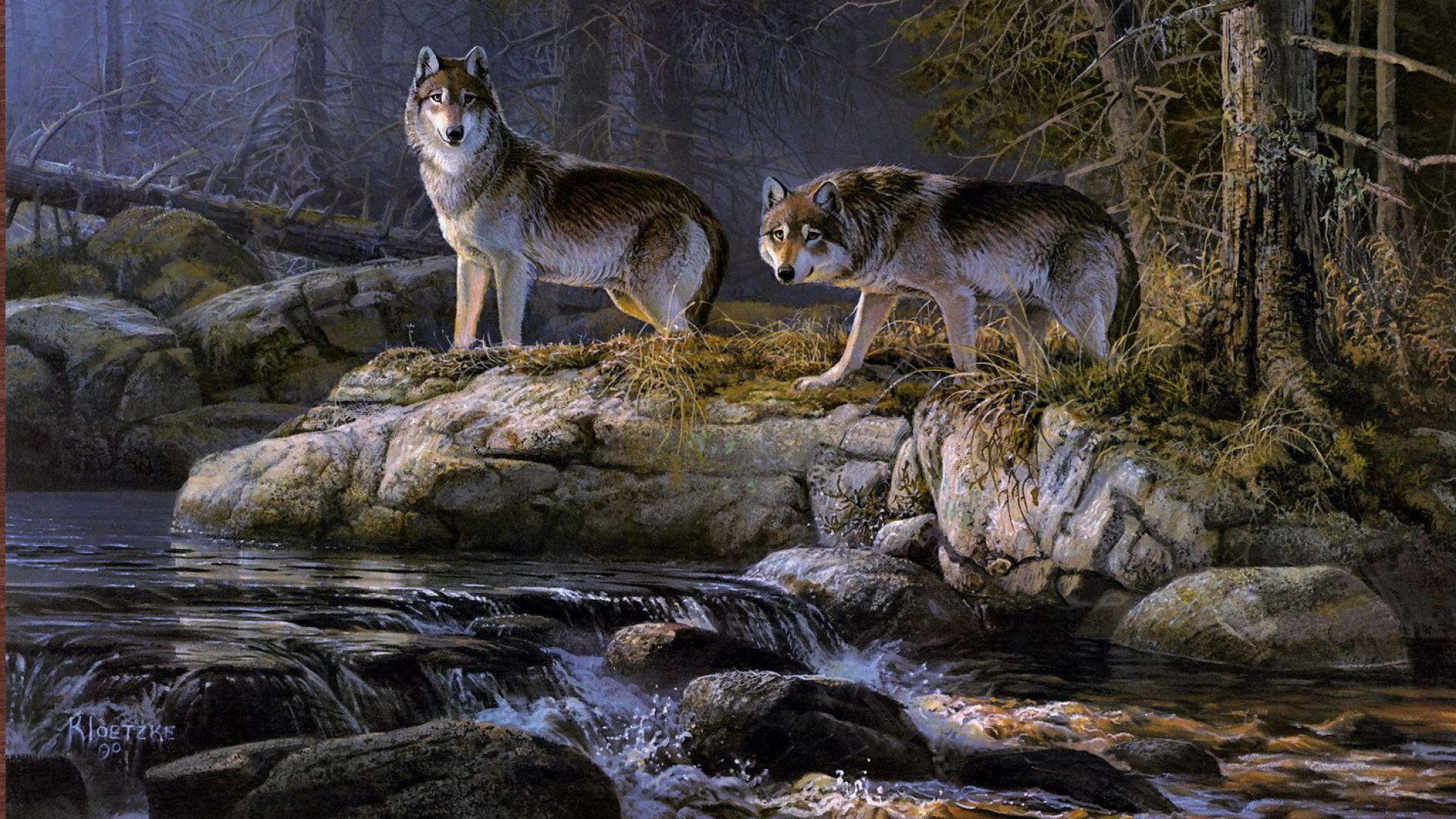 Wild Animal Wolf Wallpapers Hd 51074 Wallpaper: Download Wallpaper ID 1487285