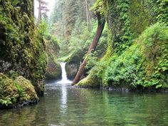 Eagle Creek Trail is a 25.6 mile heavily trafficked out and back trail located near Cascade Locks, Oregon that features a waterfall and is rated as moderate. The trail offers a number of activity options and is accessible from April until October. Dogs are also able to use this trail but must be kept on leash.